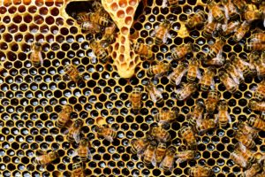 api alveare Miele Luna di Miele