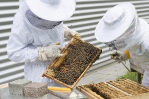 apicoltore miele luna di miele